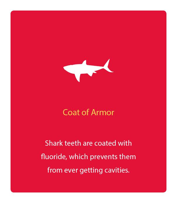 45-Shark_fluoride.jpg